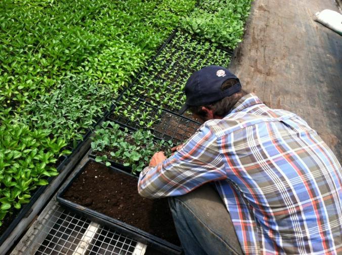 seedlingsandrew