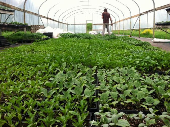 seedlingsjacob